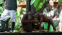 Sandakan Sepilok Orang Utan Rehabilitation Center Full-Day Trip from Kota Kinabalu