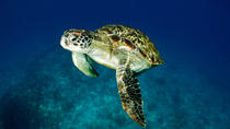 Satang Island Turtle Conservation and Snorkeling Day Trip from Kuching, Kuching