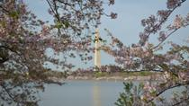 Washington DC Cherry Blossom Segway Tour