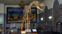 1 Day All-Museum Private Tour With Free Admission, Ulaanbaatar, City Tours