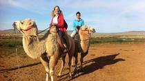 1 Day Semi-Gobi Tour Including Lunch And Free Camel or Horseback Ride, Ulaanbaatar, Bus & Minivan ...