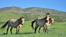 2 Day Hustai National Park Tour including Overnight at Ger Camp, Ulaanbaatar, Multi-day Tours
