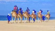 Baja Ranch Tour and Camel Safari from Los Cabos, Los Cabos, 4WD, ATV & Off-Road Tours