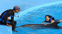 Dolphin Trainer for a Day in Cabo San Lucas, Los Cabos, Swim with Dolphins