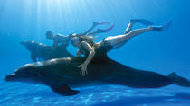 Swim with the Dolphins in Cabo San Lucas, Los Cabos, Dolphin & Whale Watching