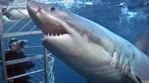 Full-Day Shark Cage Diving from Cape Town, Cape Town, Shark Diving