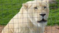 Lions Tigers Eagles Owls Ducks and Wine Tasting, Cape Town, Wine Tasting & Winery Tours