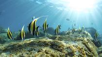 Espiritu Santo Island All Inclusive Sailing Trip from Los Cabos, Los Cabos, Sailing Trips