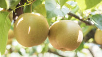 Day Trip to Pick Japanese Pears at an Organic Farm , Tokyo, Day Trips