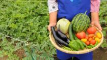 Harvest Seasonal Vegetables with a Local Japanese Farmer in Tokyo, Tokyo, Cultural Tours