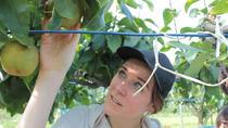 Japanese Pear Picking and Organic Farm Adventure, Yokohama, 4WD, ATV & Off-Road Tours