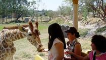 Guadalajara Zoo All-Inclusive Admission Ticket, Guadalajara, Zoo Tickets & Passes