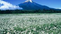 Mt. Fuji and Fuji Five Lakes Taxi Tour from Yokohama, Yokohama, Private Day Trips
