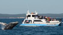 Hervey Bay Premium Whale Watching Cruise, ハービーベイ