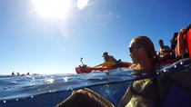 Kauai South Shore Sea Kayak Adventure, Kauai, Private Sightseeing Tours
