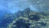 Guided Snorkeling Tours by Boat with Pictures in Tenerife, Tenerife, Snorkeling
