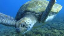 Guided Snorkeling with Turtles with Free Pictures in Tenerife, Tenerife