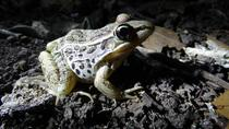 Salve Terra Park: Night Walk, Guanacaste and Northwest, Eco Tours
