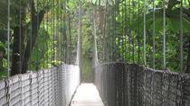 Arenal Hanging Bridges Tour, La Fortuna, Nature & Wildlife