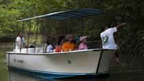 Damas Mangroove Boat Tour from Manuel Antonio, Quepos