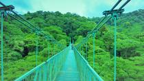 Monteverde Cloud Forest and Hanging Bridges from Guanacaste, Liberia, Day Trips