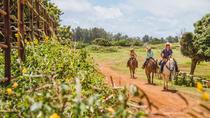 90 Min Horseback Ride, Oahu, Horseback Riding
