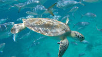 Barbados Glass Bottom Boat Turtle Shipwreck Adventure and Beach Day, Barbados, 4WD, ATV & Off-Road ...