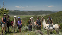 Hiking Adventure with Pack Llama Rentals, Reno, Cultural Tours