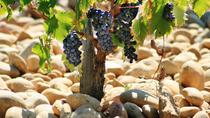Full Day Cotes du Rhone Wine Tour with Tasting from Avignon, Avignon, Wine Tasting & Winery Tours