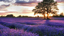 Full Day Provencal Villages and Lavender Fields Walking Tour from Avignon, Avignon, Full-day Tours