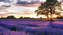 PRIVATE Full Day Provencal Villages and Lavender Fields Walking Tour from Avignon, Avignon, Private ...