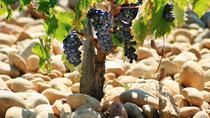 Private Full-Day Tour of Cotes du Rhone with Wine Tasting from Avignon, Avignon