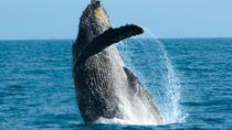 Whale Watching Cruise in Puerto Vallarta, Puerto Vallarta, Day Cruises