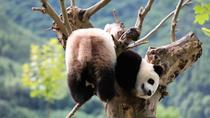All Inclusive Chengdu Highlights Private Day Tour, Chengdu, Private Sightseeing Tours
