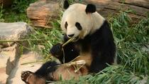Private Day Tour: See Giant Pandas and Mutianyu Great Wall, Beijing, Cultural Tours