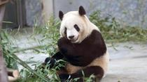 Private Day Tour to Xian Zoo including Seasonal Fruit-picking and Organic Dinner, Xian, Zoo Tickets...