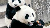 Private Day Tour to Xian Zoo including Seasonal Fruit-picking and Organic Dinner, Xian, Nature & ...