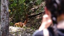Sunrise Hike at Calakmul Biosphere Reserve, Campeche, Hiking & Camping