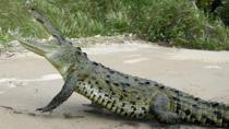 Carara National Park - Jungle Crocodile Safari - Lunch, Puntarenas, Nature & Wildlife