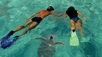 Lanai Island Dolphin and Snorkel Cruise from Maui, Maui, Family Friendly Tours & Activities