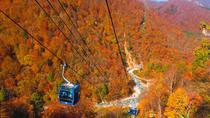 Fall Foliage Experience by Gondola Day Trip from Tokyo, Chubu, Half-day Tours