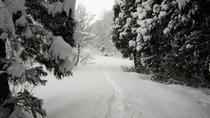 Snowshoeing with Soba Lunch in Niigata, Chubu, Ski & Snow