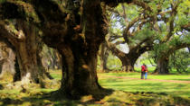 Double Plantation Tour in New Orleans, New Orleans, Plantation Tours