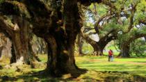 Louisiana Plantation Life Tour, New Orleans, Plantation Tours
