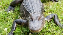 New Orleans Swamp and Bayou Tour with Lunch, New Orleans, Airboat Tours