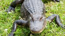 Swamp and Bayou Tour with Lunch, New Orleans, Airboat Tours