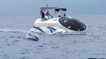 Ocean Wildlife Adventure, Oahu, Nature & Wildlife