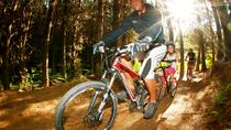 4-Hour Guided Mountain Bike Tour of Whakarewarewa Redwood Forest, ロトルア