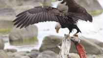 Chilkoot Wilderness and Wildlife Viewing - Haines Departure, Skagway, Kayaking & Canoeing
