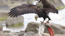 Chilkoot Wilderness and Wildlife Viewing - Skagway Departure, Skagway, Kayaking & Canoeing